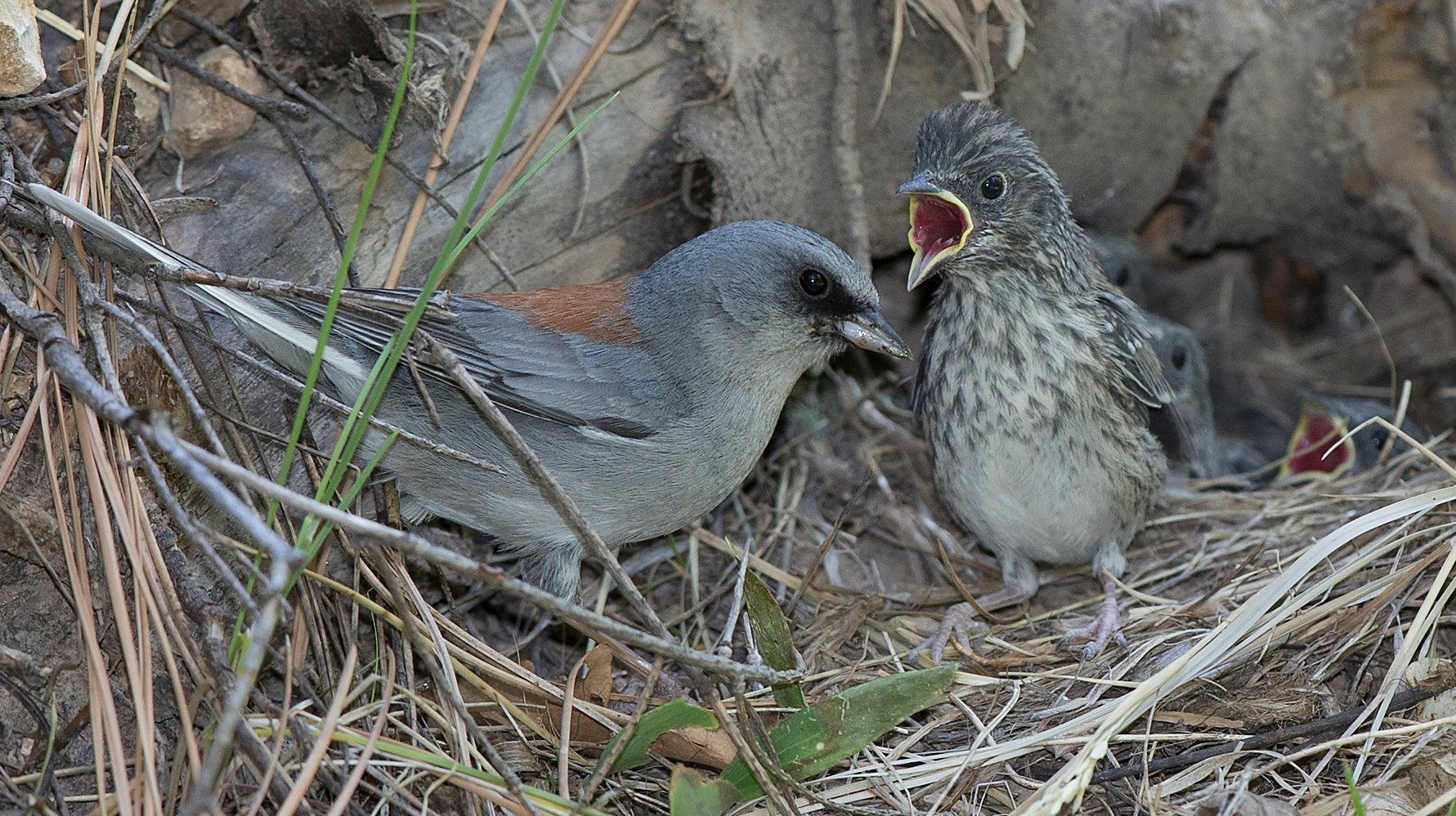 Even Birds Struggle To Become Empty Nesters