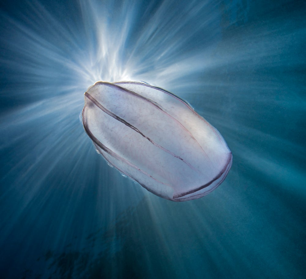 These Award-Winning Underwater Photographs Are Dazzling