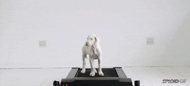 Cute video shows a puppy grow into a big dog over time