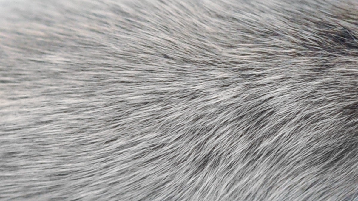 Scientists Find Another Possible Explanation For Why Hair Goes Grey