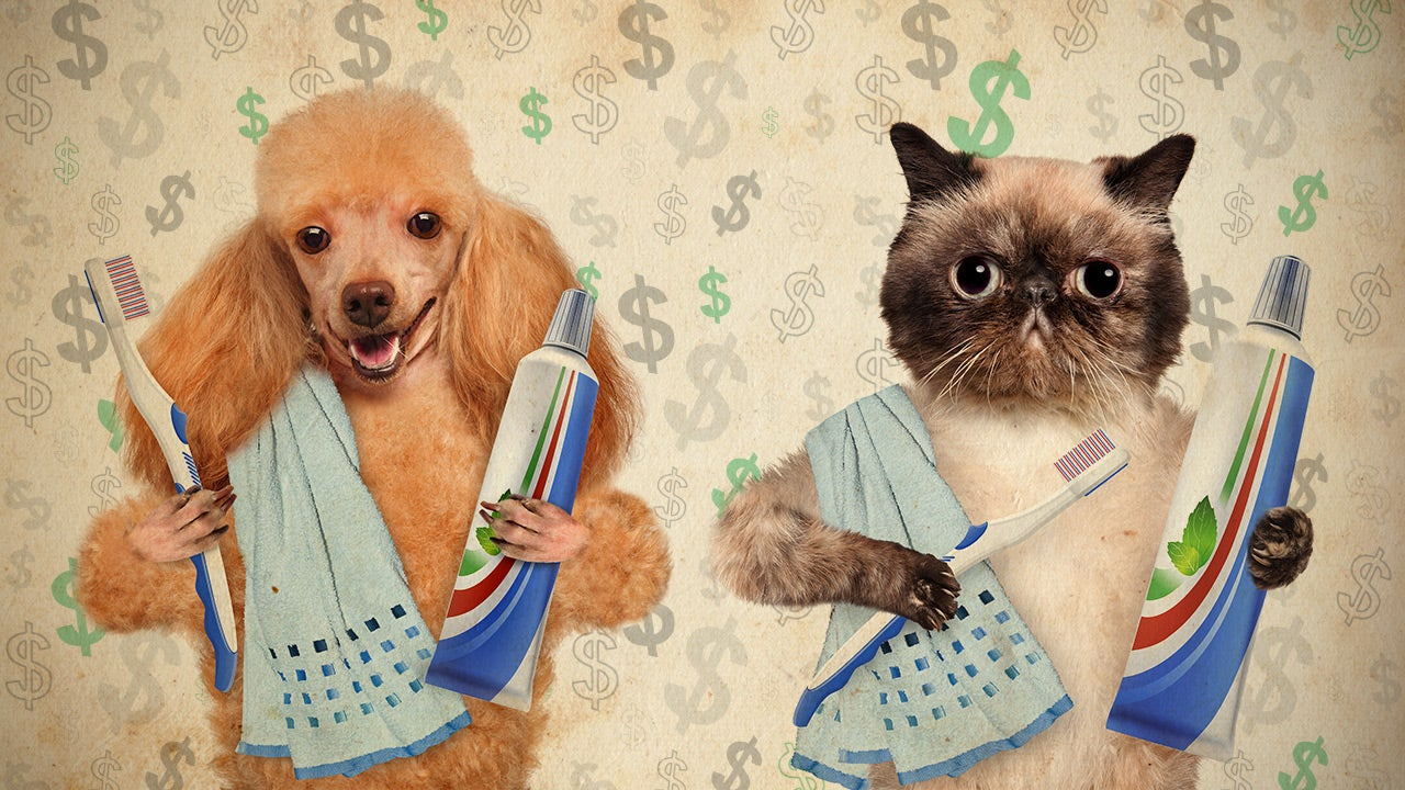 How Do You Save Money on Pet Care?