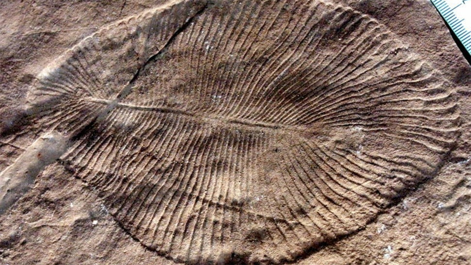 Early Animals Could've Caused Earth's First Mass Extinction Simply By Existing
