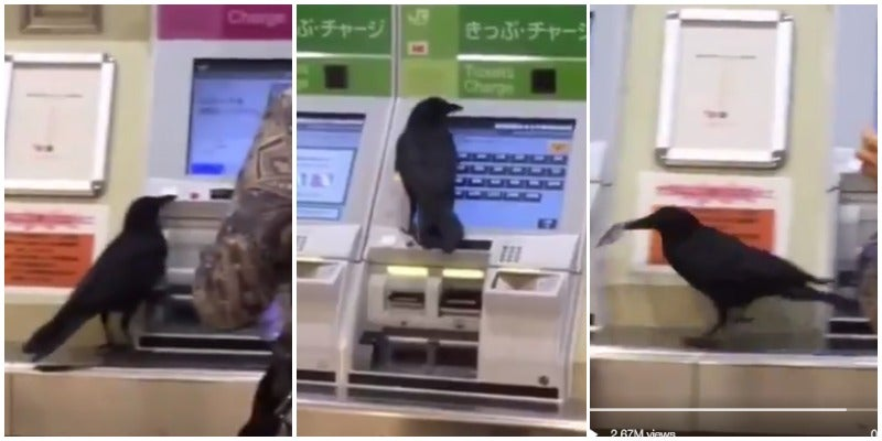 Can Someone Please Help This Crow Buy A Train Ticket?