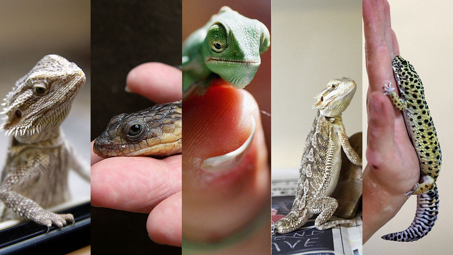 Global Warming Is A Major Threat To Our Overlords, The Lizards