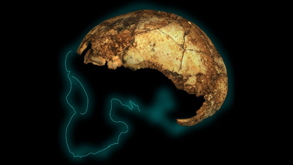This Tiny Skull Cap Is Rocking What We Know About An Ancient Human Species