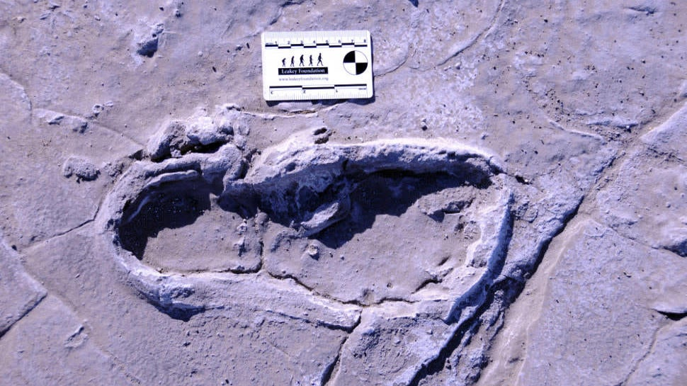 Hundreds Of Fossilised Human Footprints Provide A Glimpse Of Ancient Life In Africa