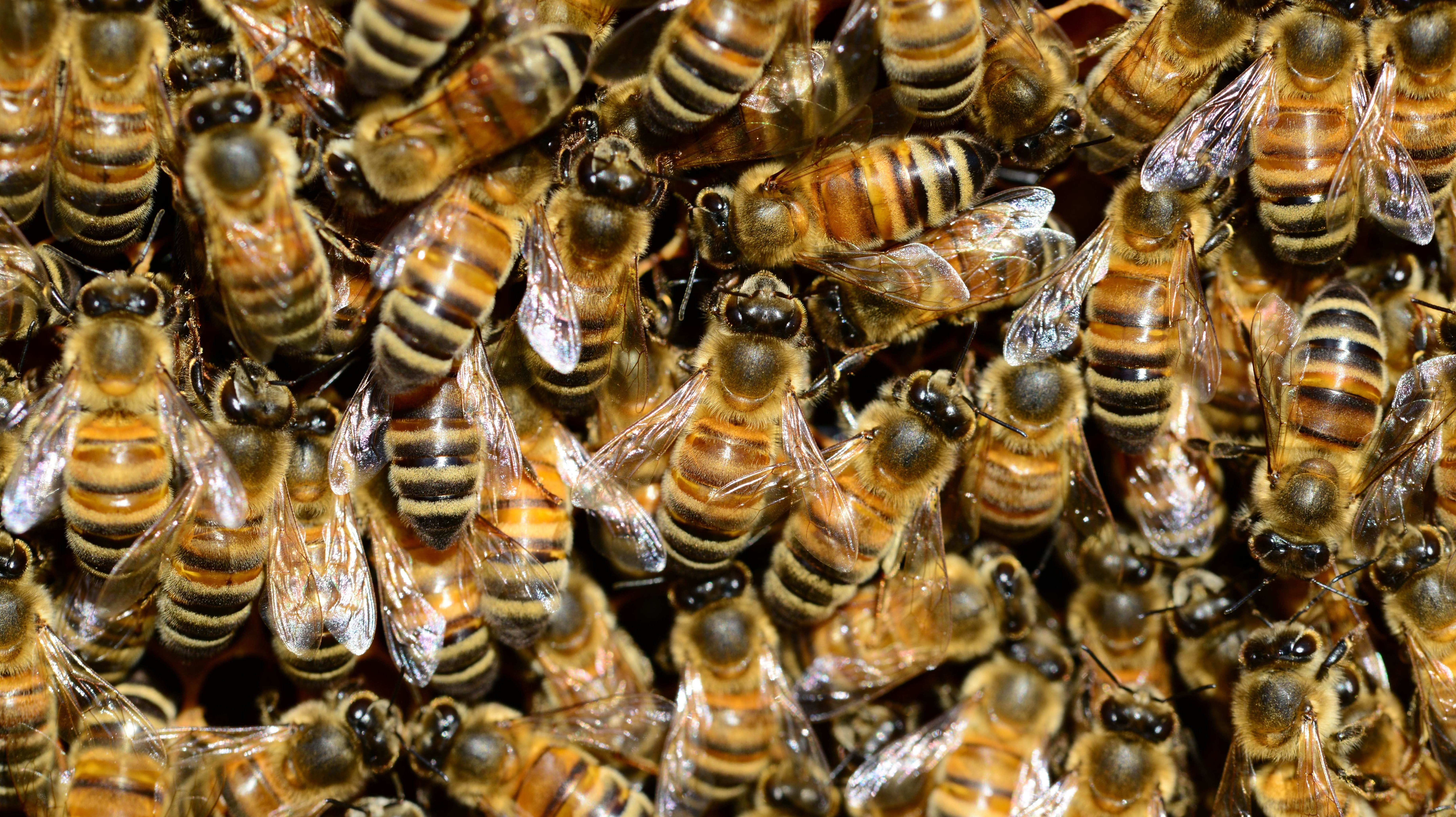 Call A Beekeeper, Not An Exterminator