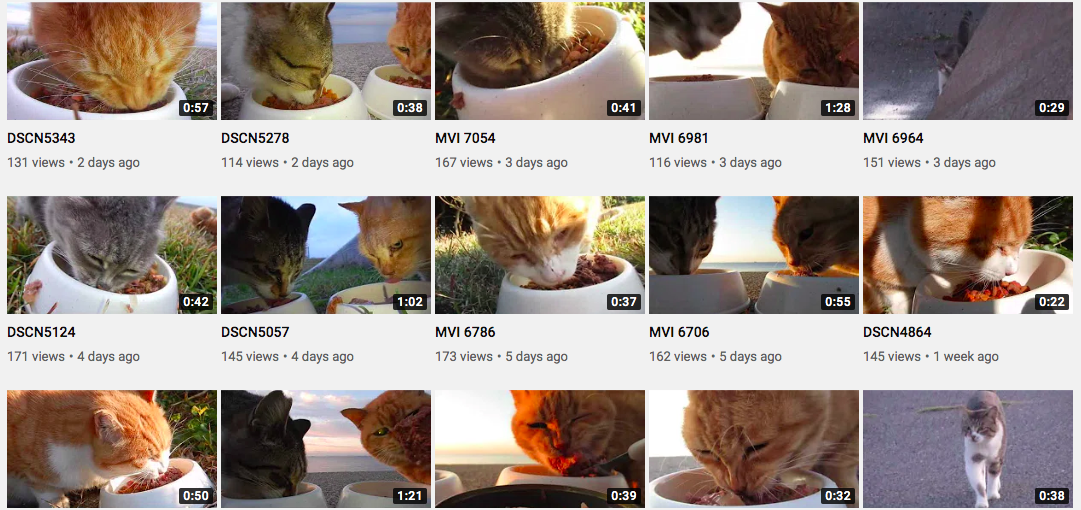YouTube Channel Of A Man Feeding Stray Cats Keeps Me Calm
