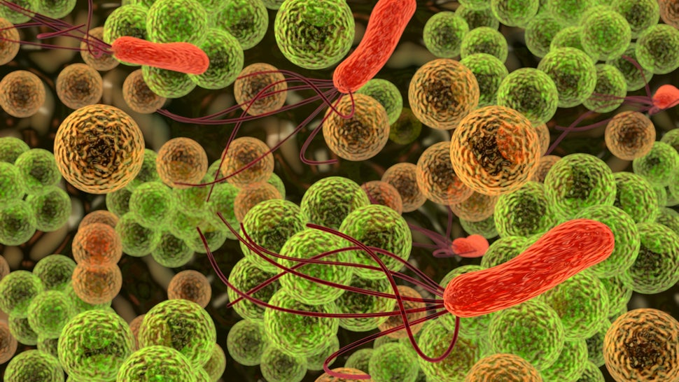 Microbes That Cause UTIs Use Hooks to Hold On While We Pee