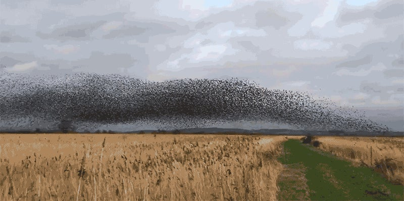 Chaotic Dust Storm Turns Out to Be a Massive Flock of 70,000 Birds