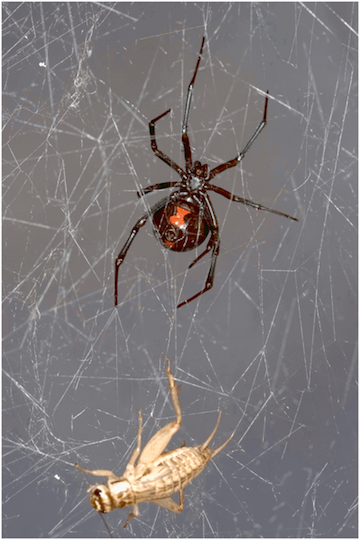 Scientists Analysed Spiderweb DNA, and the Results Are Super Creepy