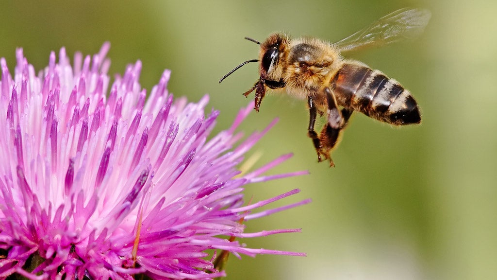 Yet Another Reason Bees Are Screwed: Your Damn Almonds