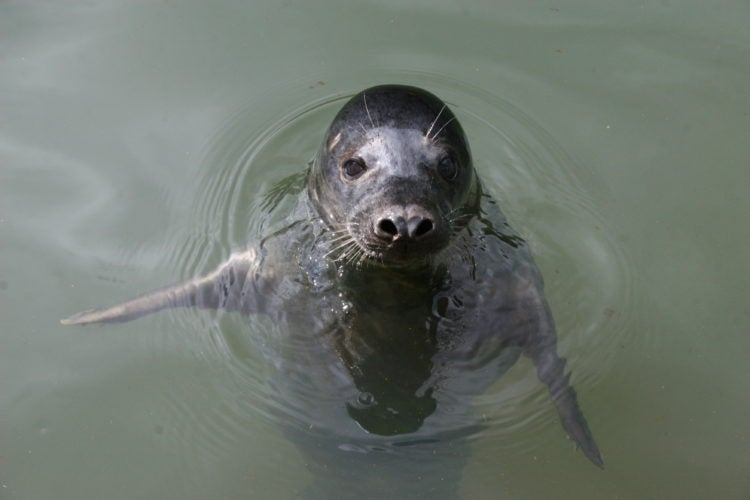 Why Scientists Trained A Seal To Sing The Star Wars Theme