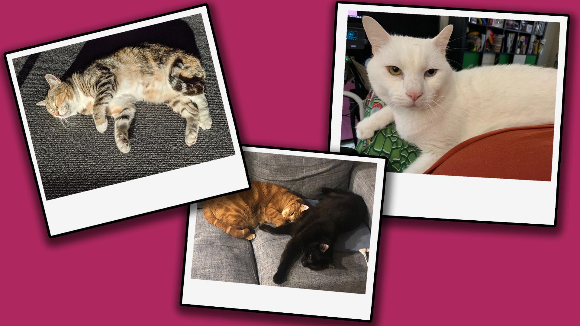 The Cats Of Kotaku