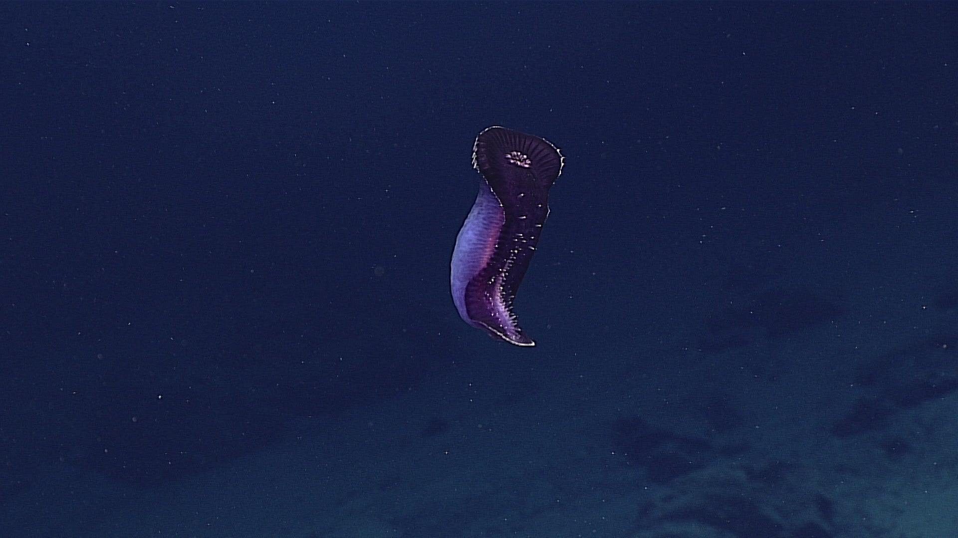 Check Out the Seriously Gnarly Creatures Discovered at the Bottom of the Mariana Trench