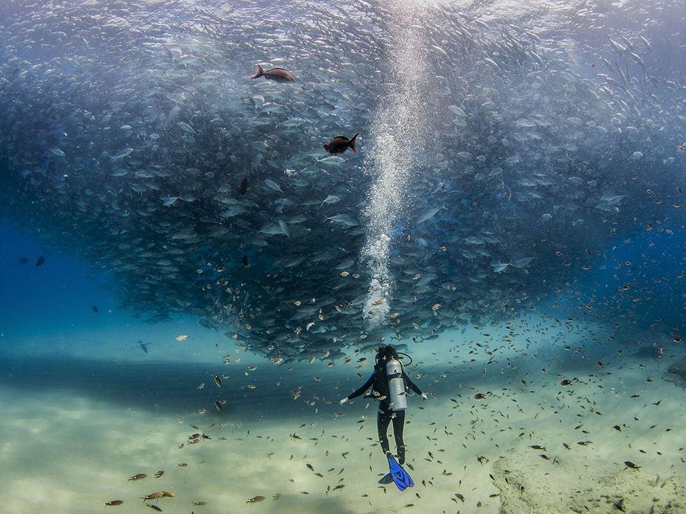 Spectacular Photo Of A Scuba Diver Swimming Under A Massive Fish Tornado