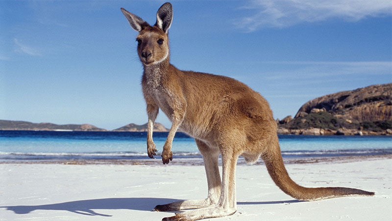 Australian Animals That Won't Kill You, Ranked | Kotaku Australia