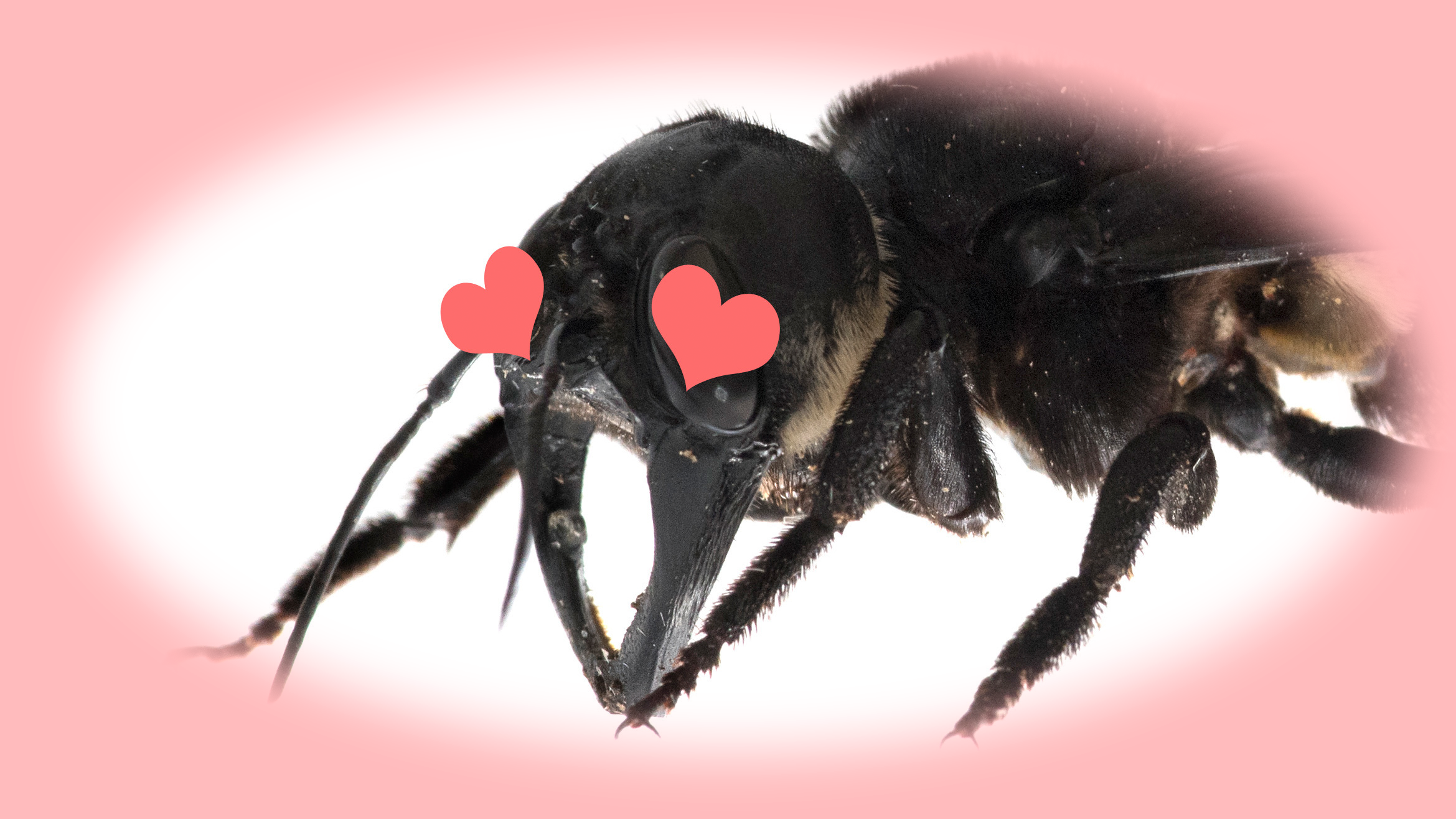 The World's Biggest Bee Just Buzzed Into My Heart
