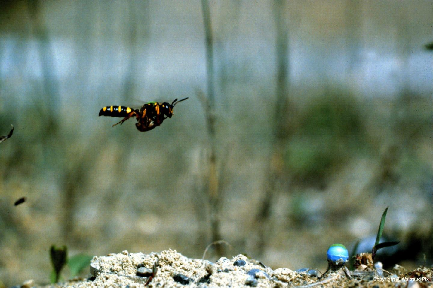 This Wasp's Eye View of the World Will Make You Nauseous