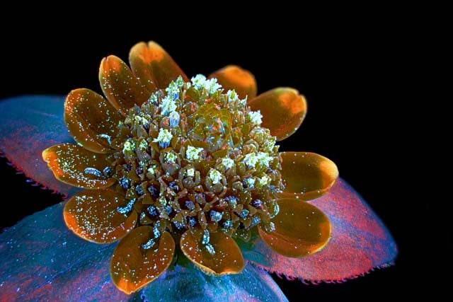 The Alien and Eerie Beauty of the Year's Best Microscopic Photos