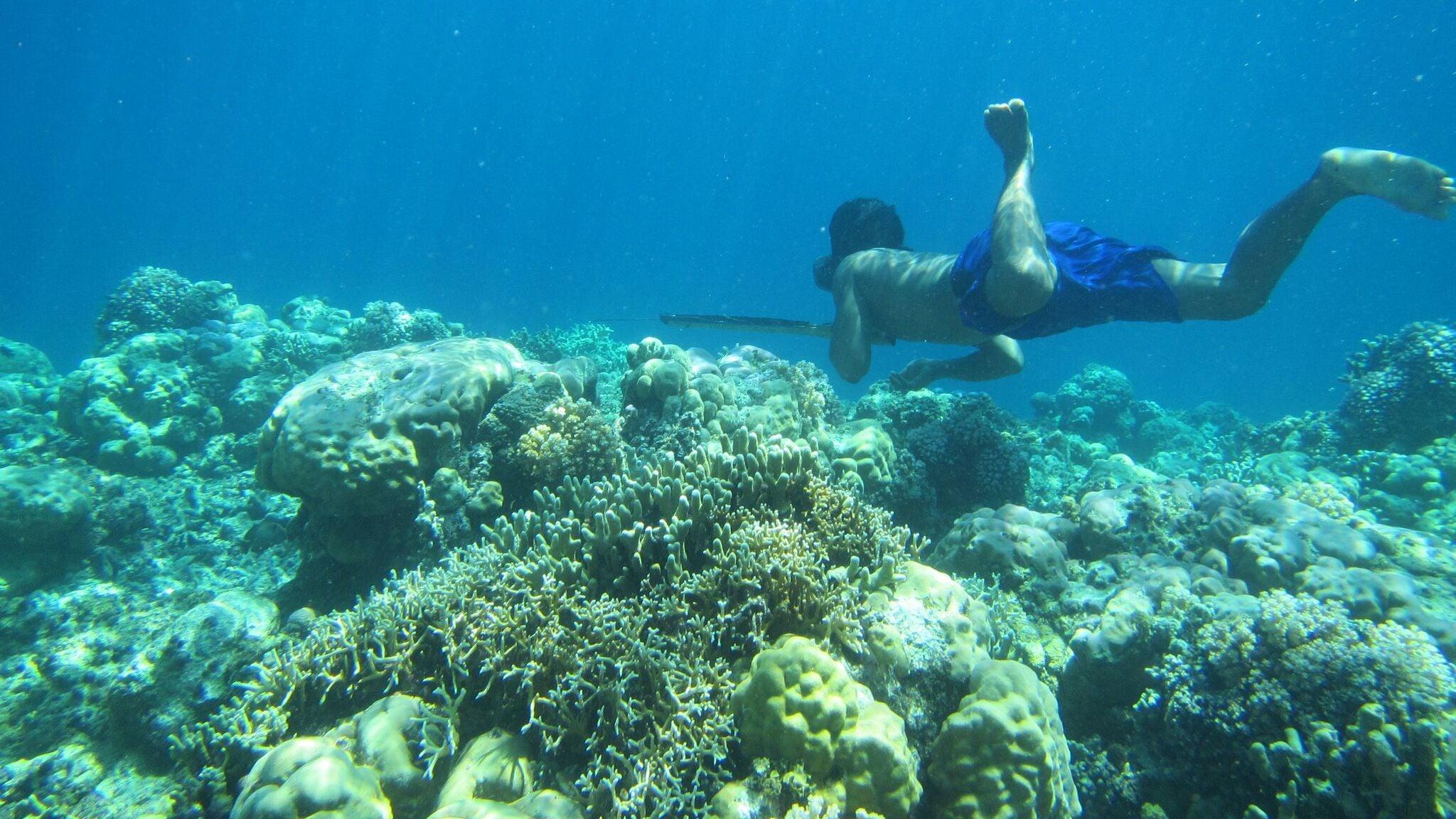 Rare Mutation Among Bajau People Lets Them Stay Underwater Longer