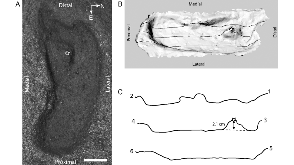 Controversial Study Suggests 15,600-Year-Old Impression Is The Oldest Human Footprint Ever Found In The Americas