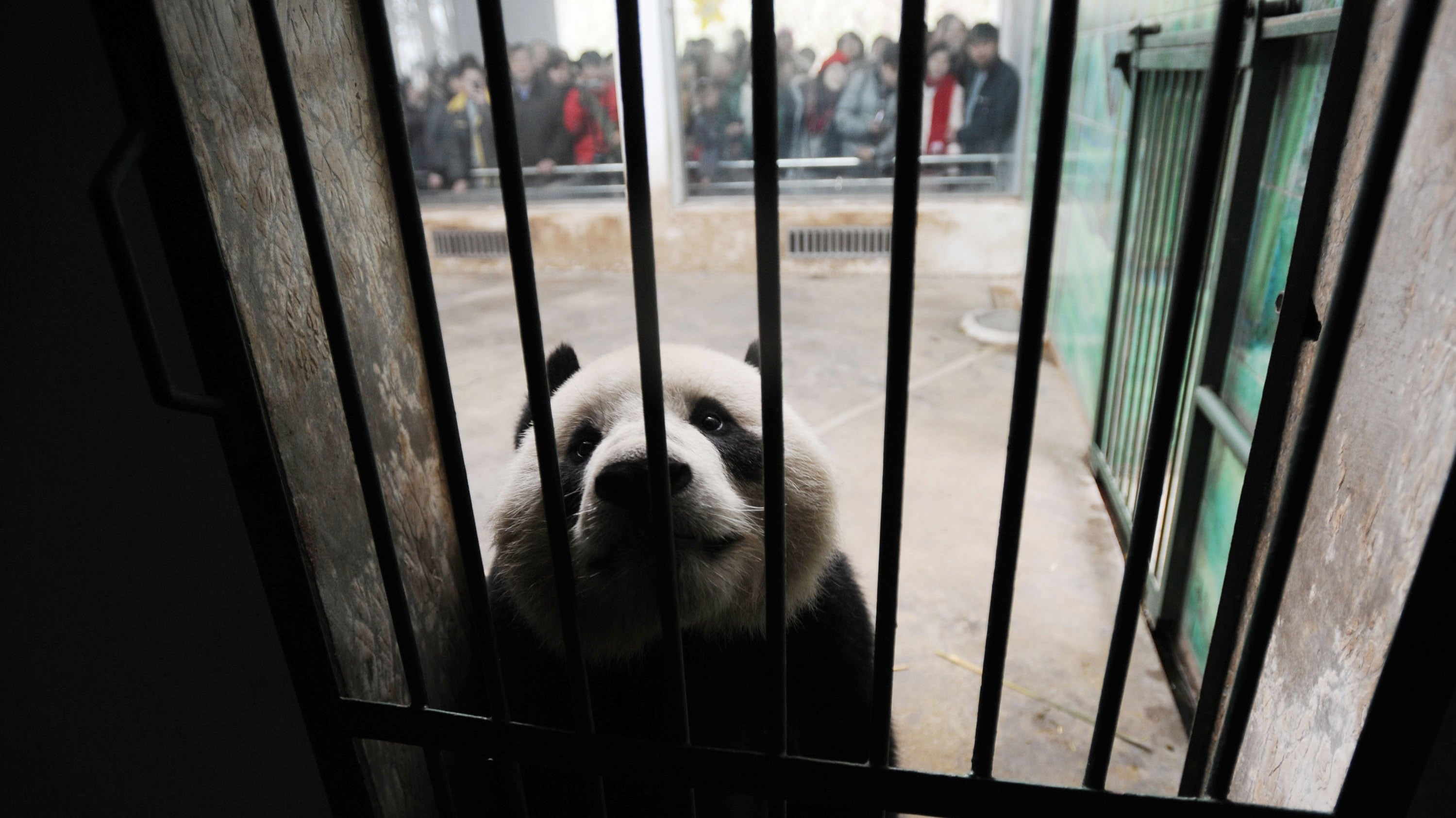 How To Find A More Ethical Zoo