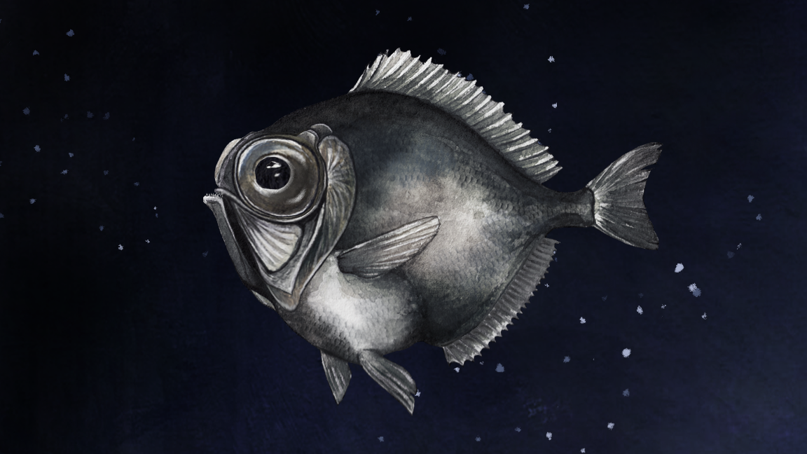 Some Deep-Sea Fish Can See Colour In Near Total Darkness