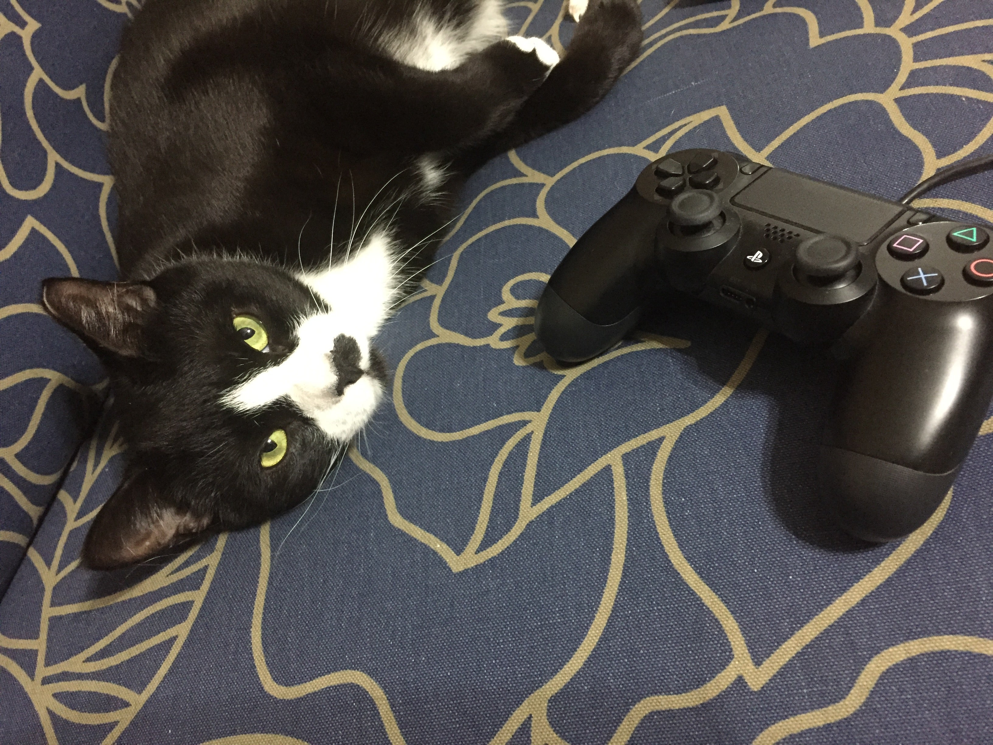 How To Stop A Cat From Chewing On Video Game Controller Cables