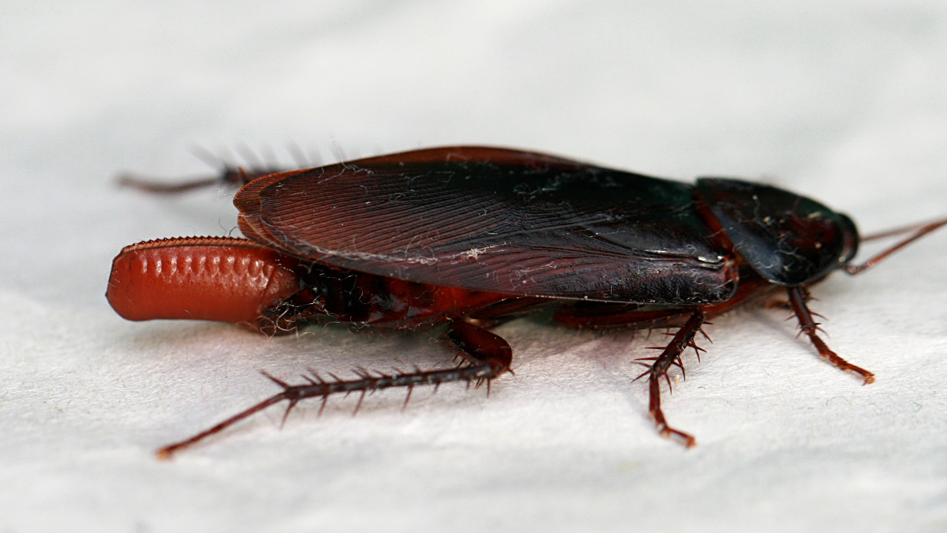 Man Says Dying Roach Left Eggs In His Ear: 'I Heard It Die In My Head'