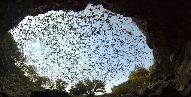 What It Looks Like When Millions of Bats Fly Away from Their Bat Cave at Once