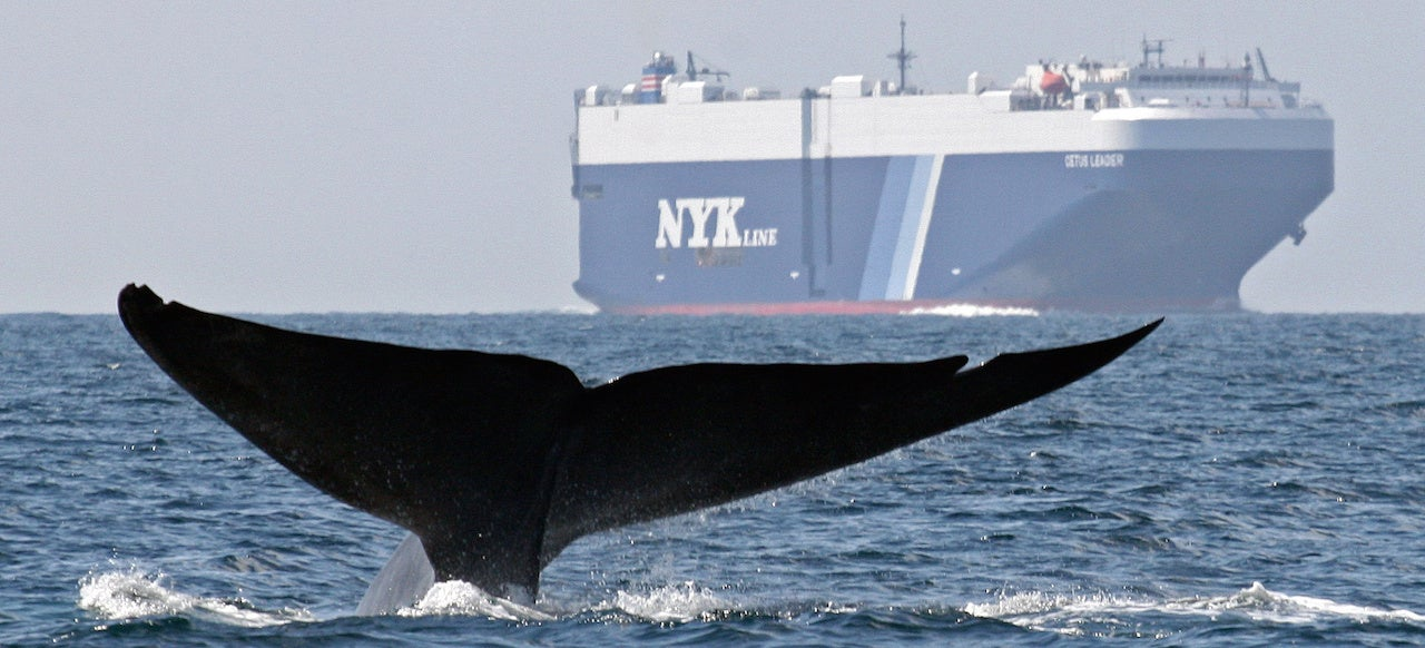 UN: Ships Need To Shut Up So Whales And Dolphins Can Hear