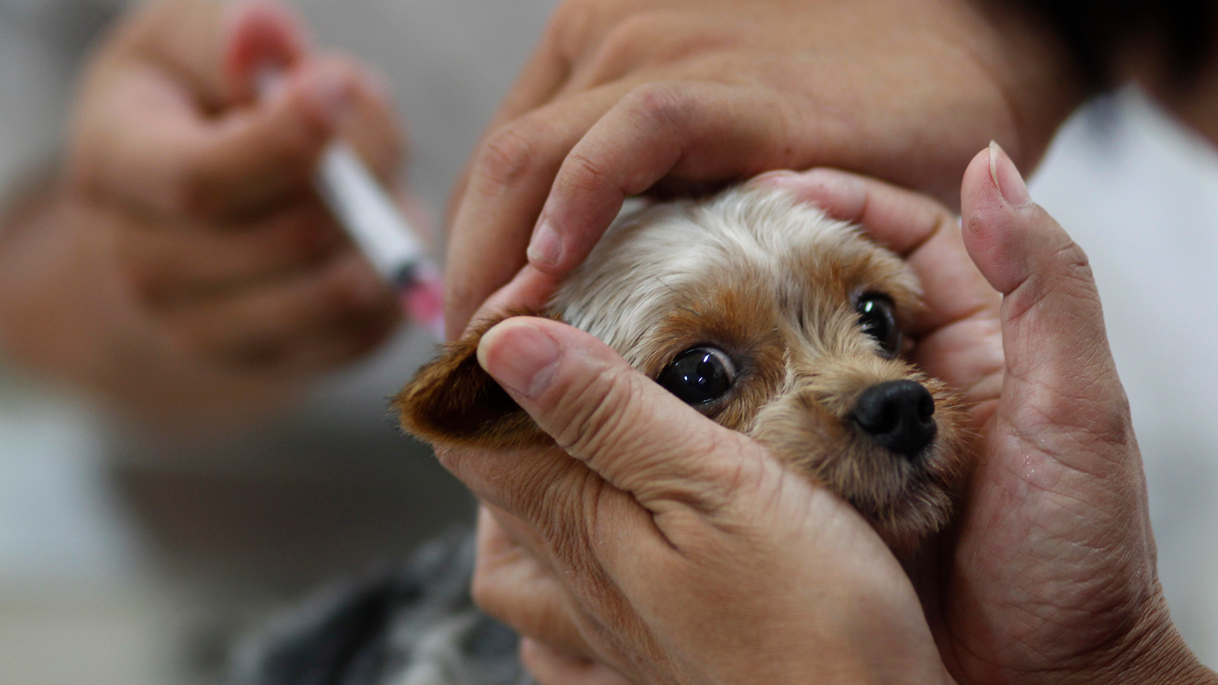 Maybe Leave Dogs Out Of This Anti-Vaccine Nonsense