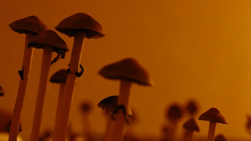 If You're Going To Do Recreational Drugs, Magic Mushrooms Are Apparently Safest
