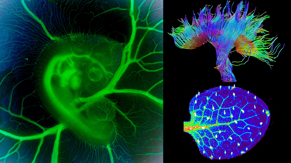 These Science Photos Are So Beautiful They're Basically Art