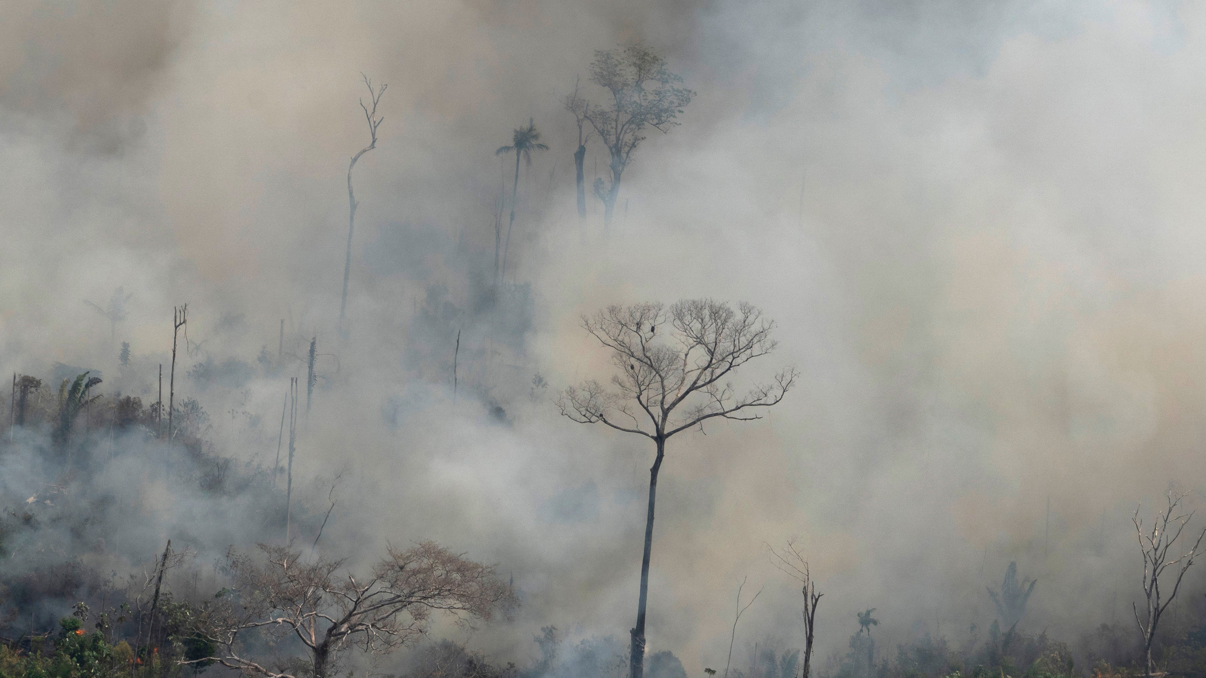 Criminal Gangs Are Behind The Destruction Of The Brazilian Amazon