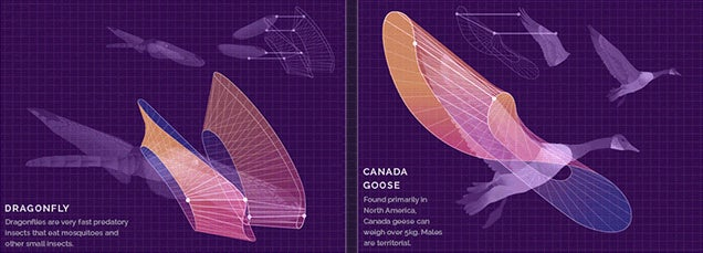 Cool Animated Technical Illustrations Show How Animals Fly