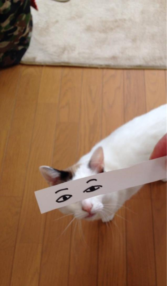 Fake Cartoon Eyes for Cats Make Everything Better
