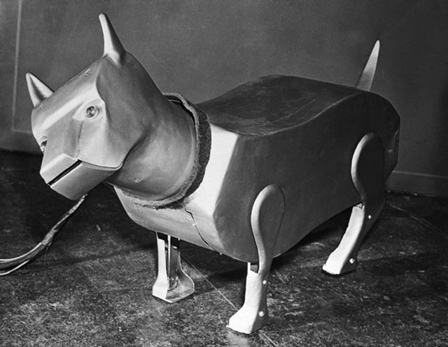 6 Pets That Were Supposed To Be Man's Best Friend In the Future