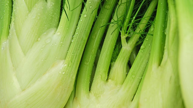 Save Fennel Stalks from the Garbage and Use Them Instead of Celery
