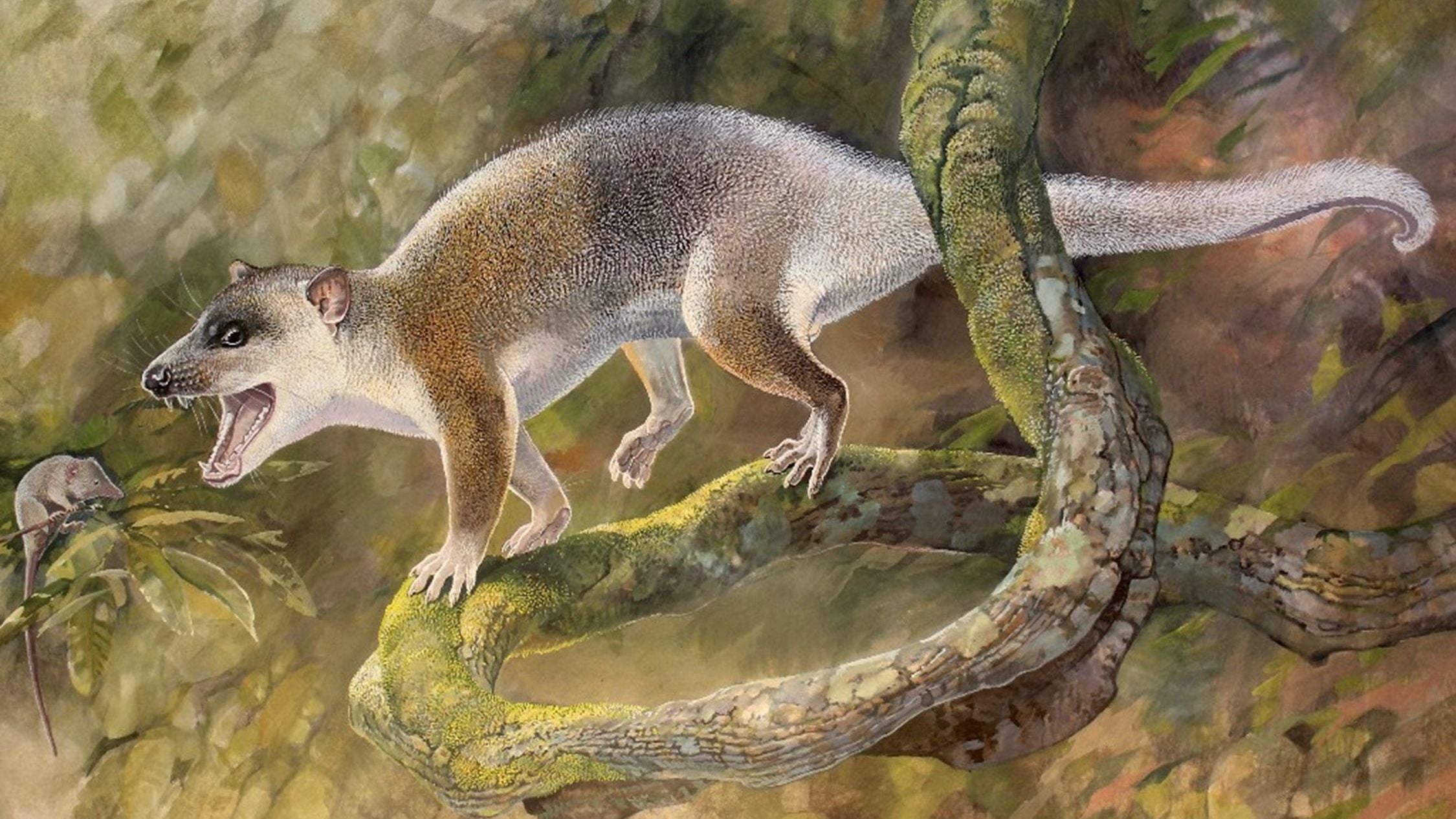 Ancient Carnivorous Dread-Possum Is Upending The History Of Mammals