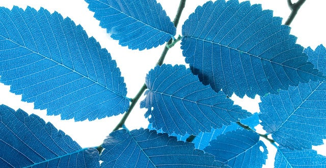 The Quest To Re-Invent Photosynthesis Just Got More Colourful