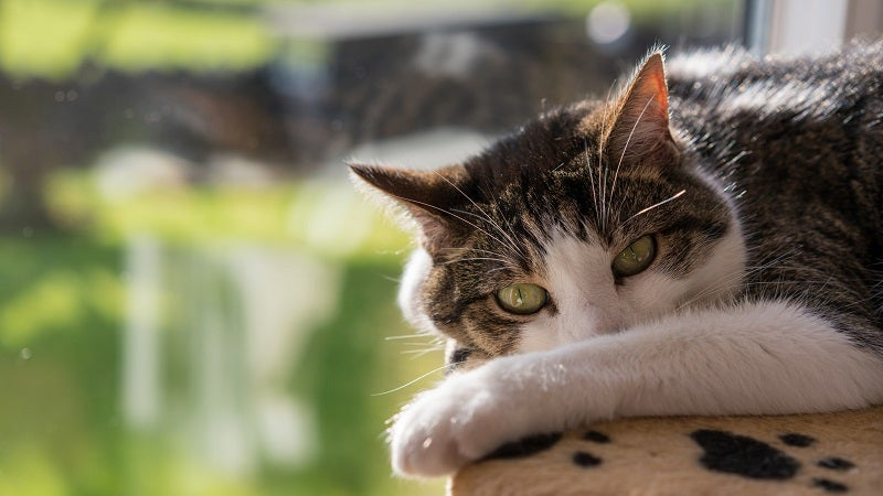 Improve Your Cat's Health And Happiness With Some DIY Puzzle Feeders