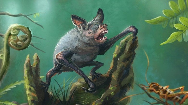 Discovery Of Extinct Burrowing Bat Tells Mysterious Story About New Zealand