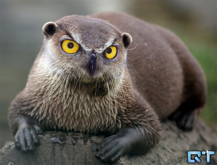 Yikes, these animal hybrids are so hilariously terrifying