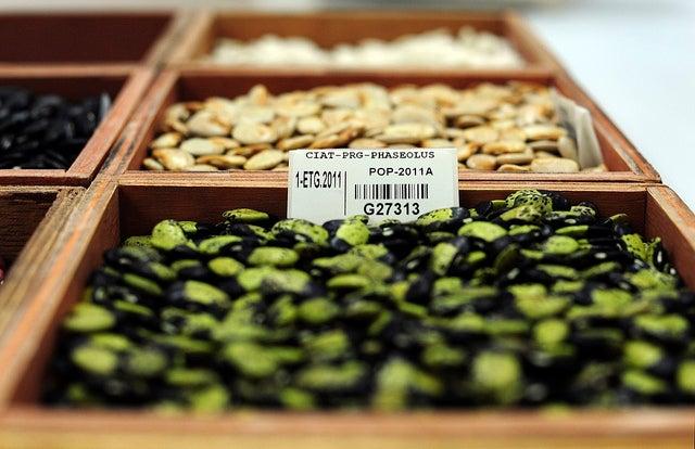 Doomsday Seed Vault Adds 20k New Crops — Including Beer Barley