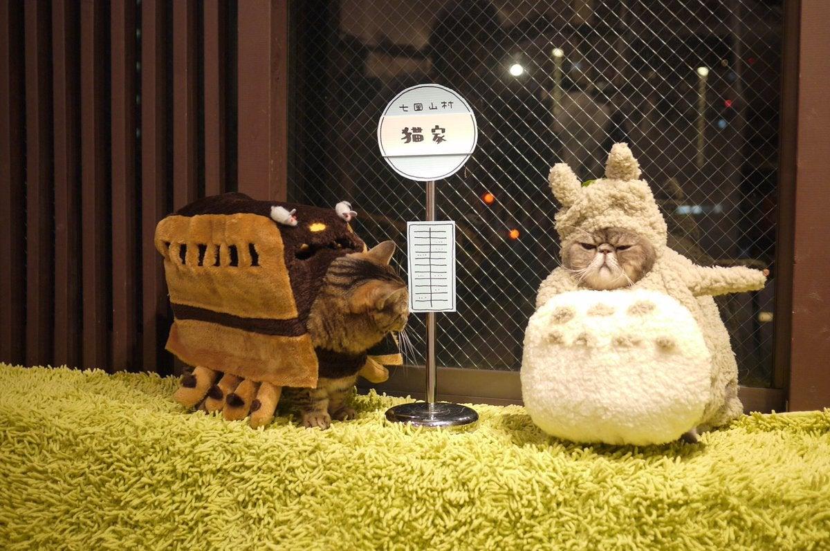 Nakoya Aih Bikin Gemas Kucing Ini Kenakan Kostum Cosplay