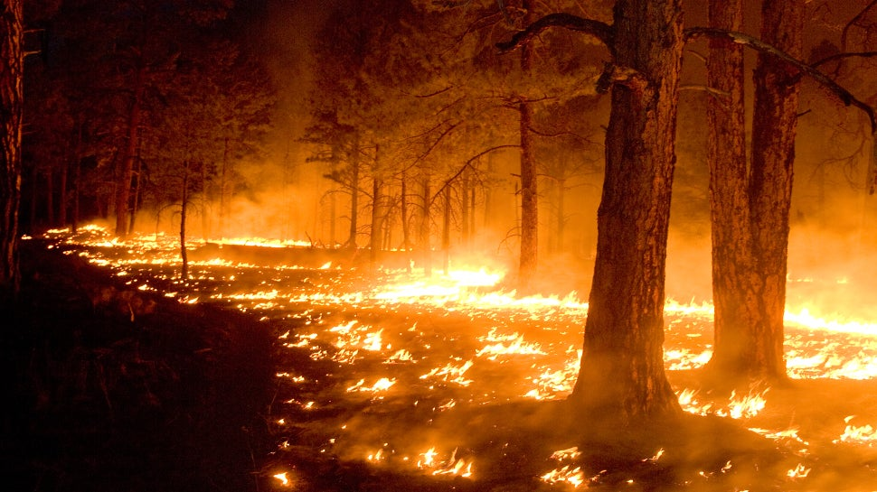 Bushfires Have Already Toasted A Staggering Amount Of Land In The US This Year