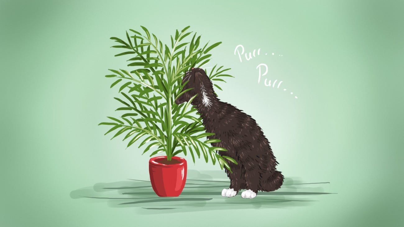 The Best Low-Maintenance, Pet-Friendly Houseplants