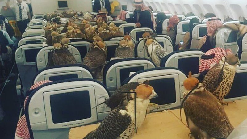 Someone Brought A Bird Army On A Flight And Everyone Seems Pretty Chill About It